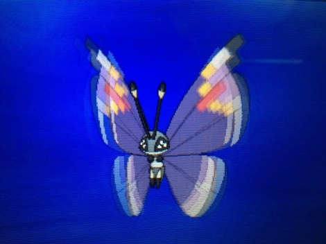 This is my Vivillon and she's beautiful.