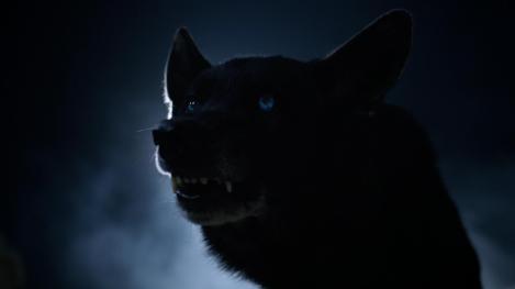 [teenwolfdaily.com]